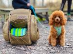 Disc golf bag filled with discs, next to a brown poodle