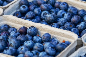 A row of containers holding blueberries